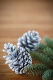 Christmas tree with cones Stock Image