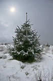 Christmas tree covered in snow Stock Photo