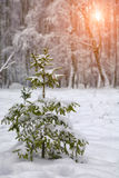 Christmas tree covered with snow in the city park Royalty Free Stock Photo