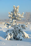 Christmas Tree covered with snow Stock Photo