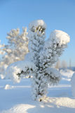 Christmas Tree covered with snow Royalty Free Stock Images