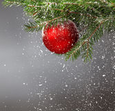 Christmas tree covered with snow and decorated with red ball Royalty Free Stock Photography