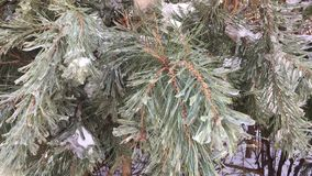 Christmas tree covered with snow stock footage