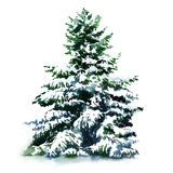 Christmas tree covered snow in winter, isolated. Christmas tree covered snow in winter isolated, watercolor painting on white background Stock Photo
