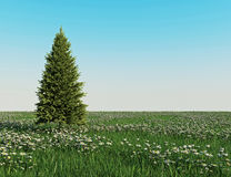 Christmas tree on the Daisy field Royalty Free Stock Image