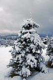 Christmas Tree Decorated by Nature. A Christmas tree blanketed in a heavy snow Stock Images