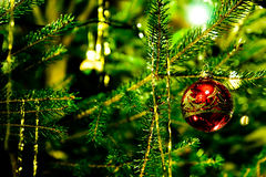 Christmas tree decoration. Christmas tree branches decorated with a red ball royalty free stock image