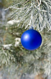 Christmas-tree decoration on a pine. Tree covered with hoarfrost Royalty Free Stock Photography