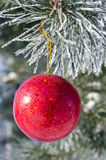 Christmas-tree decoration on a pine. Tree covered with hoarfrost Royalty Free Stock Photos