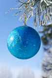 Christmas-tree decoration on a pine. Tree covered with hoarfrost Royalty Free Stock Photo