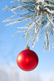 Christmas-tree decoration on a pine. Tree covered with hoarfrost, shallow depth of field Stock Photo