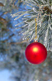 Christmas-tree decoration on a pine. Tree covered with hoarfrost, shallow depth of field Royalty Free Stock Photos