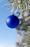 Christmas-tree decoration on a pine. Tree covered with hoarfrost, shallow depth of field Royalty Free Stock Image