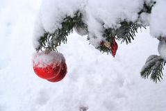 Christmas tree decoration with real snow Royalty Free Stock Images