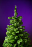 Christmas tree without decorations. Green Christmas tree without decorations, violet background Stock Images
