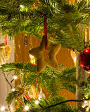 Christmas tree and decorations. Gingerbread star hanging on a christmas tree branch Royalty Free Stock Photos
