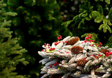Christmas tree decorations with pine cones with white snow Stock Image
