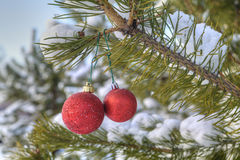 Christmas tree decorations, two red ball hanging on a pine branc Stock Photo