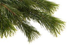 Christmas tree detail. Royalty Free Stock Photography