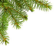 Christmas tree detail on white Royalty Free Stock Images