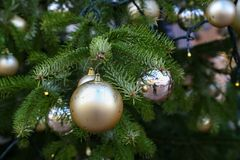The Christmas tree is dressed up for the holiday Christmas.  stock images