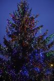 Christmas tree. Evening sky and garlands. illuminations. Holiday Decorations royalty free stock images