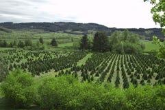 Christmas tree farm. A christmas tree farm in oregon royalty free stock photos