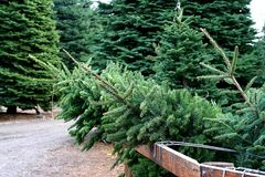 Christmas tree farm Royalty Free Stock Photography