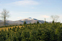 Christmas Tree Farm. In the mountains of North Carolina Royalty Free Stock Photos