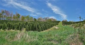 Christmas Tree Farm along Virginia Creeper Trail. A Christmas tree farm along the Virginia Creeper Trail VCT. The VCT, a 34 mile rail trail running from Whitetop stock images