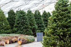 Christmas tree farm Royalty Free Stock Images