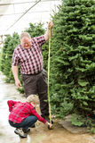Christmas tree farm Stock Photos