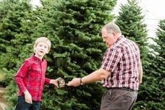 Christmas tree farm Royalty Free Stock Photography