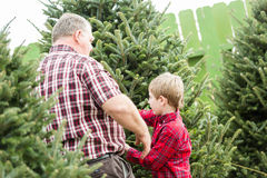 Christmas tree farm Stock Photography