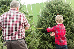 Christmas tree farm Royalty Free Stock Photo