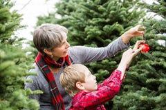 Christmas tree farm Stock Images