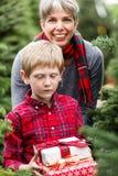 Christmas tree farm Stock Image
