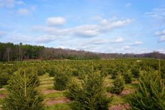 Christmas Tree Farm Landscape #2 Stock Photos