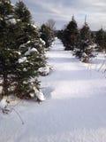 Christmas tree farm snow Stock Photo
