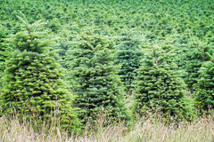 Christmas Tree Farm Stock Photos