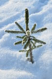 Christmas tree is feeling cold Royalty Free Stock Images