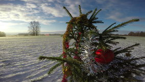 Christmas tree in the field, 4K. Christmas tree New Year in wheat field on sunny winter's day, 4K stock footage