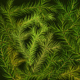 Christmas tree fir branch background. Vector illustration Royalty Free Stock Images