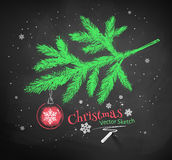 Christmas tree fir branch. Color chalk vector sketch of Christmas tree fir branch decorated with red ball on black chalkboard background Stock Photography