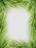 Christmas tree fir branch frame. EPS 10 vector. Christmas tree fir branch frame for decorate, isolated on transparent background. And also includes EPS 10 vector Stock Image