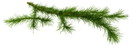 Christmas tree fir branch over white Royalty Free Stock Image