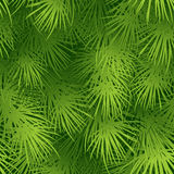 Christmas tree fir branch seamless background. Vector illustration EPS 10 Stock Photography