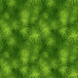 Christmas tree fir branch seamless background. Vector illustration EPS 10 Royalty Free Stock Photo