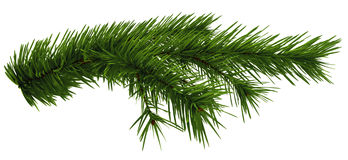 Christmas tree fir branch Stock Photography