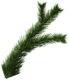 Christmas tree fir branch Royalty Free Stock Photography